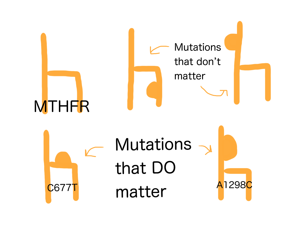 MTHFR mutations that matter are A1298C and C677T