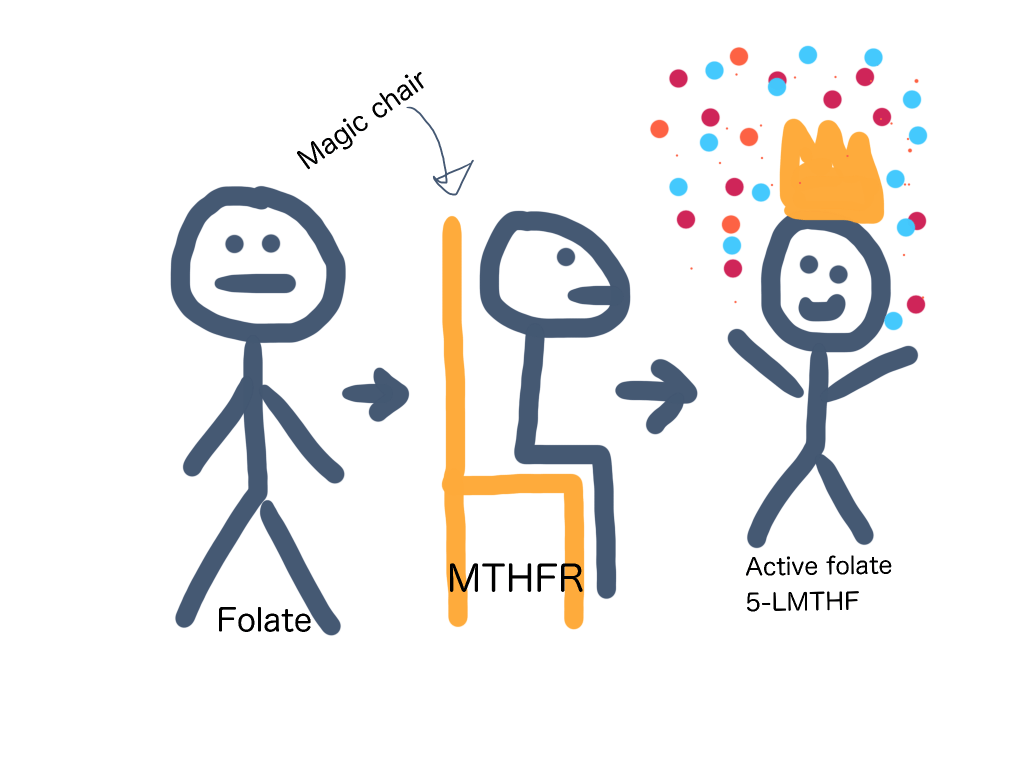 What is MTHFR in the simplest terms possible - it's a magic chair.