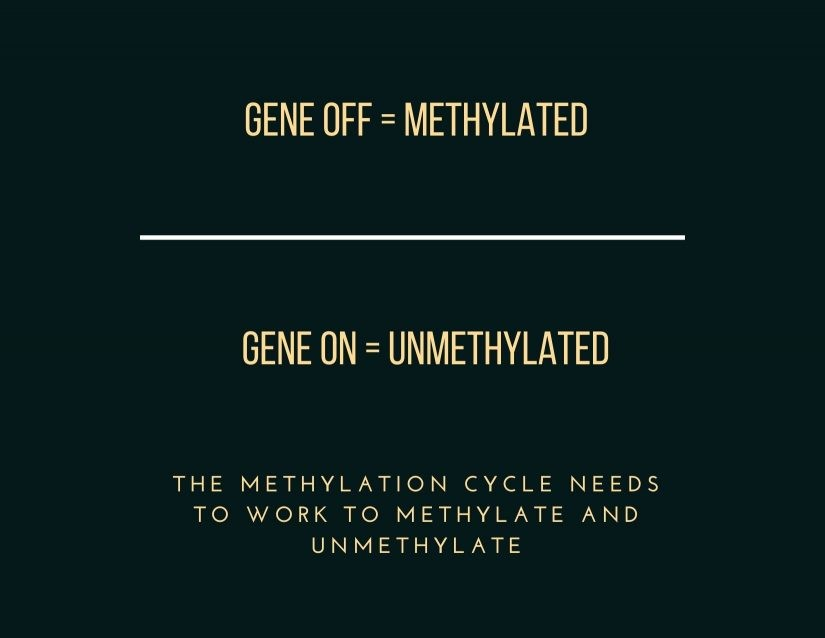 Why is methylation important? Gene Expression