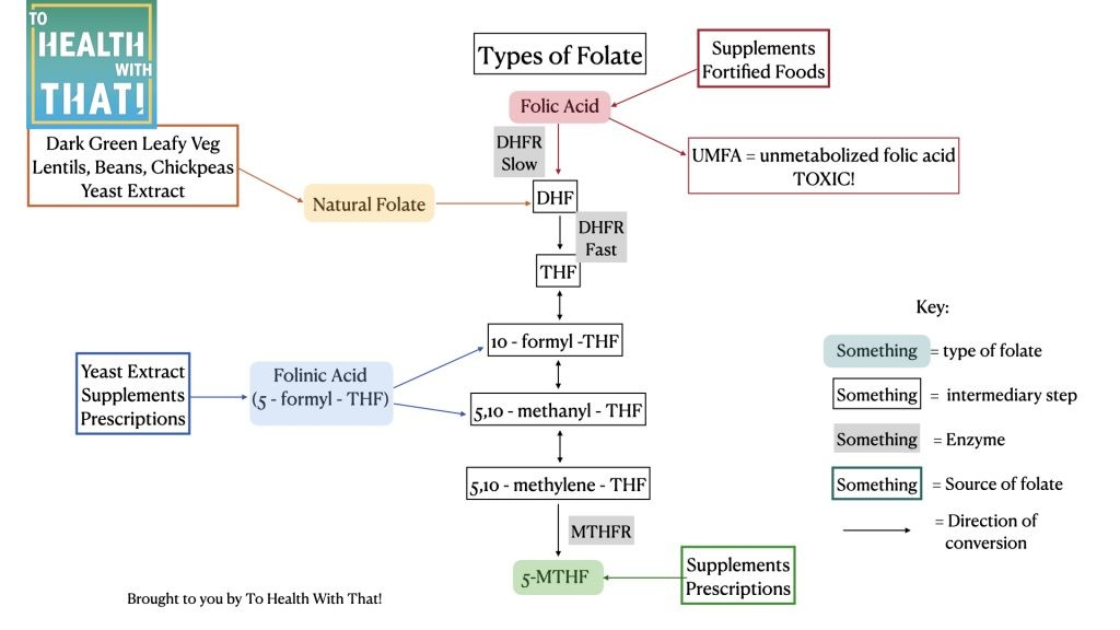 how the types of folate interact with the methylation pathway