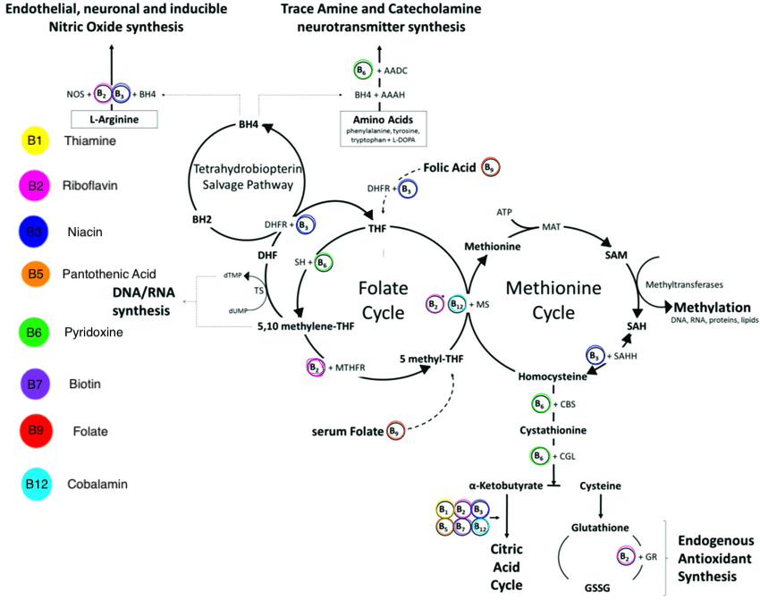 The methylation pathway showing vitamins for MTHFR. Also glutathione and MTHFR