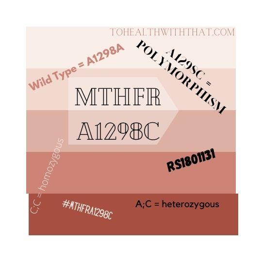 MTHFR A1298C mutation nomenclature
