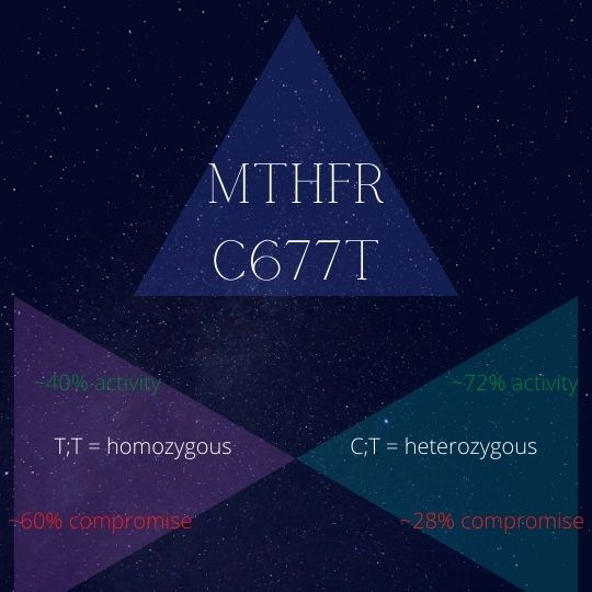 The different levels of compromise between MTHFR C677T mutations - heterozygous and homozygous.