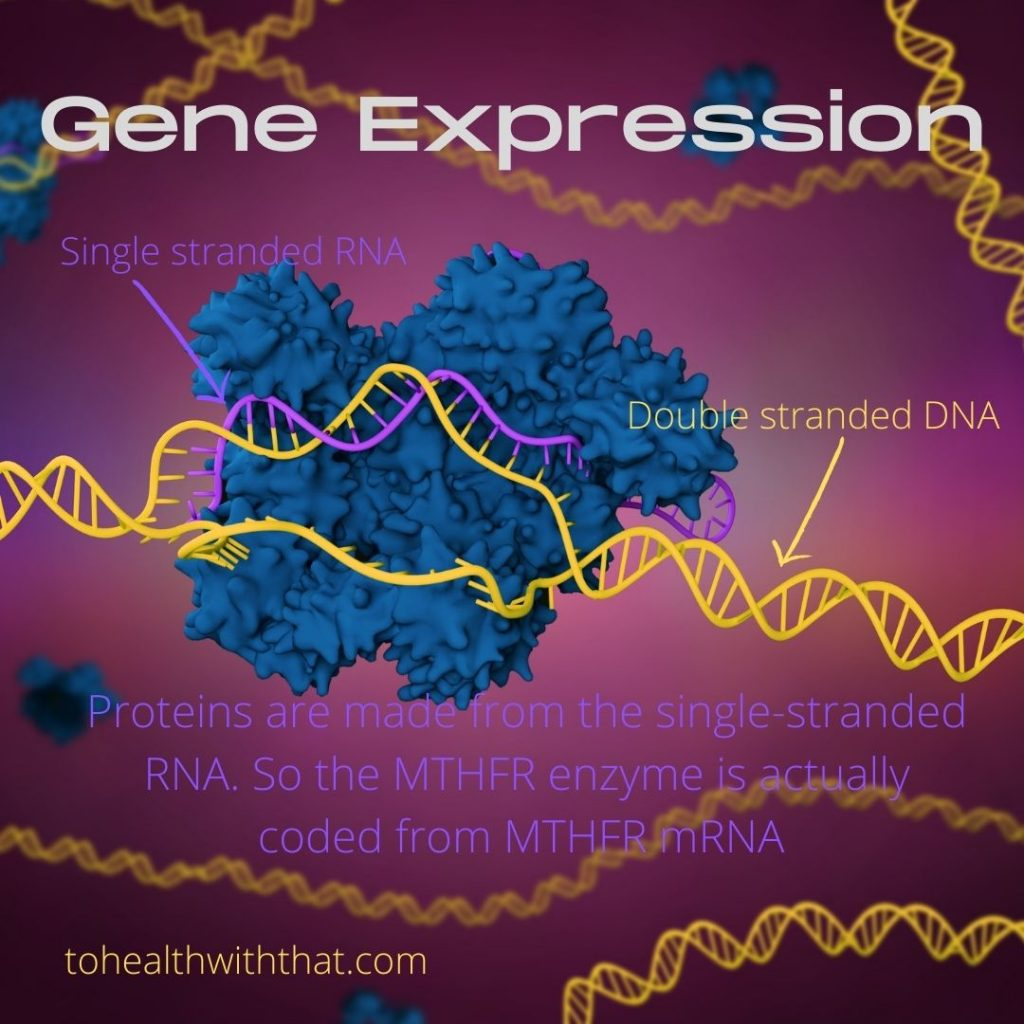 Fish oil and MTHFR go hand in hand because of what the research about gene expression shows.